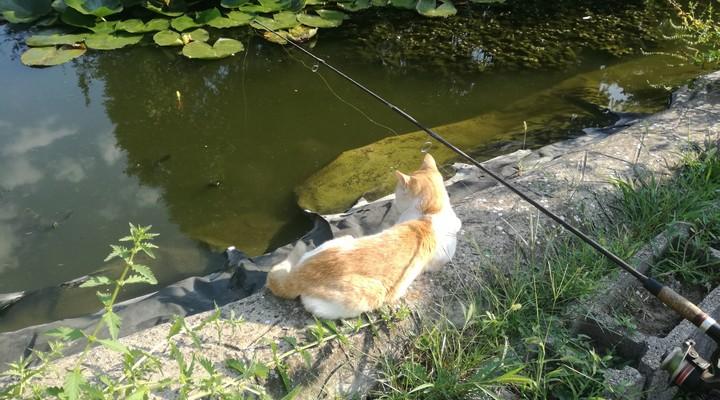 Kerti tó, pecázás a családban